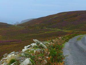 Heather covered hills on Irish cycling holidays.