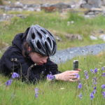 Taking a photo of bluebells during hike bike tour in Donegal