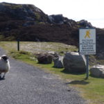 Meeting sheep on the Hike to Sliabh Liag, County Donegal, Ireland